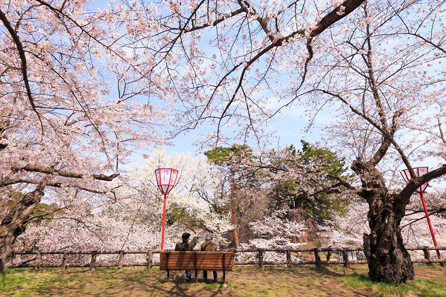 spring-japan-cherry-blossoms-national-geographics-161