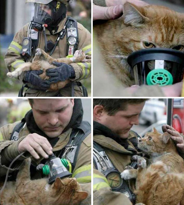 firefighters-rescuing-animals-saving-pets-15-5729c45033762__605