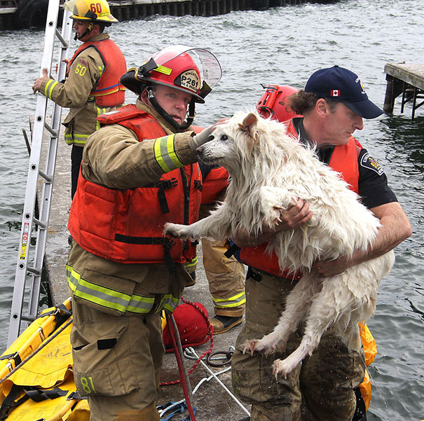 firefighters-rescuing-animals-saving-pets-26-5729ee900a48e__605