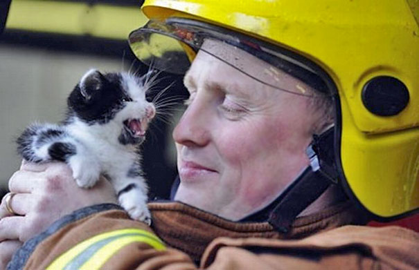firefighters-rescuing-animals-saving-pets-7-5729a904c246c__605