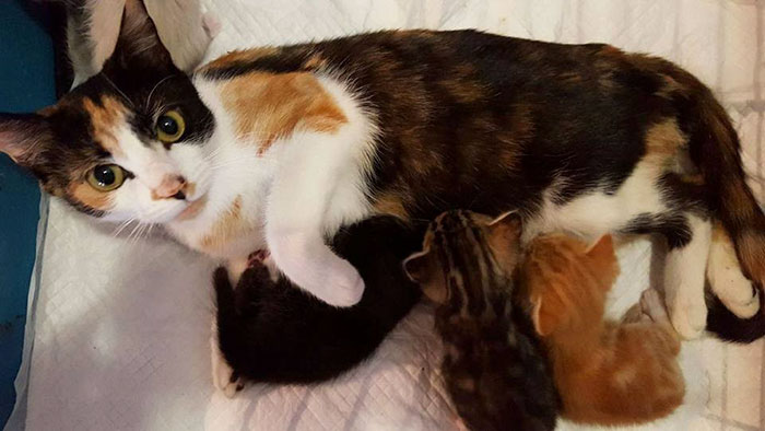 paralyzed-cat-mother-kittens-princess-3