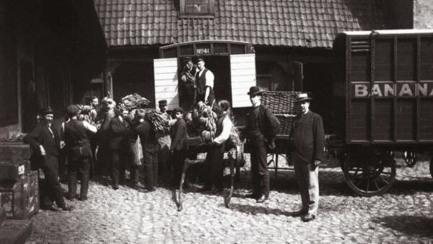 The first bananas to arrive in Norway,1905.