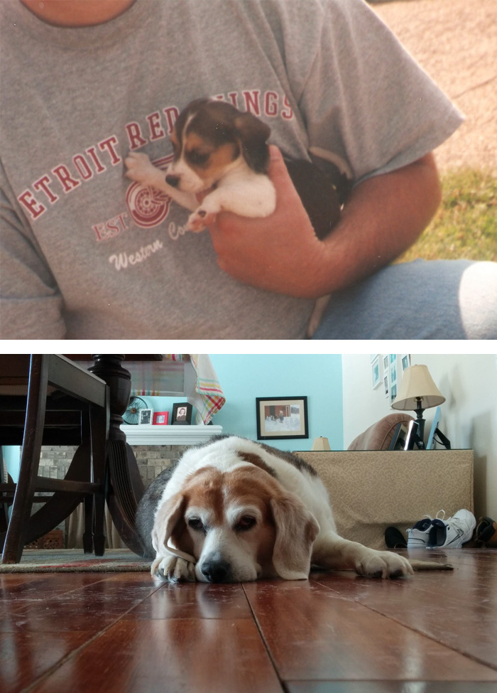 before-after-pets-growing-old-first-last-photos-7-577b77e003df6__700