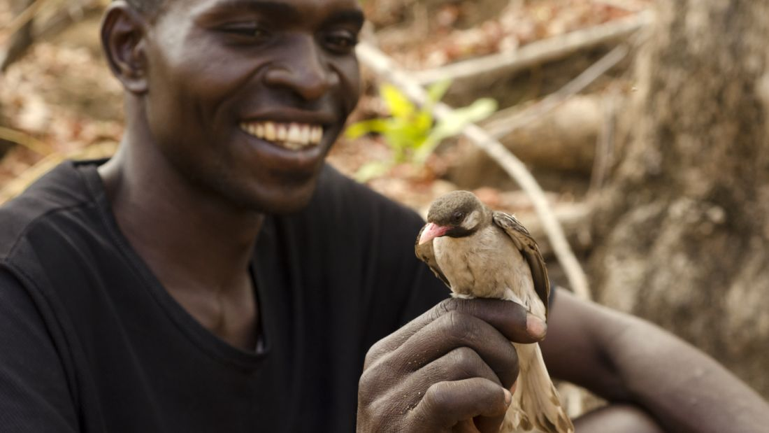 extra_large-1469184344-the-honeyguide-indicator-indicator-and-a-human