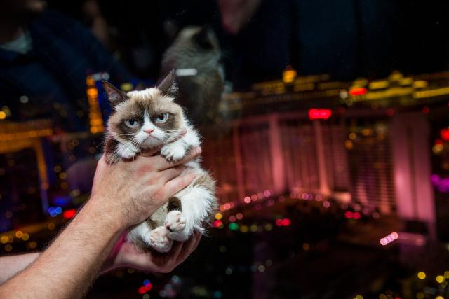 Grumpy Cat rides The High Roller Observation Wheel after her book signing at Kitson at The Linq in Las Vegas, August 5, 2014.