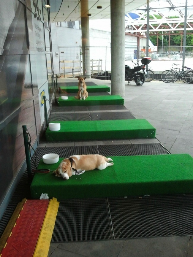 A German IKEA has these dog 'parkings' so that the owners don't have to leave their pets in cars.