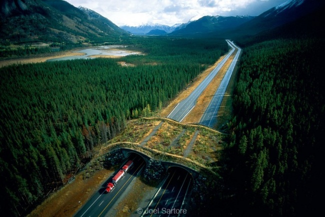 A bridge for forest creatures, Canada