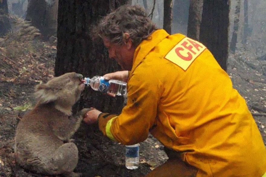 A firefighter Black Saturday bushfires in Victoria, Australia, in 2009