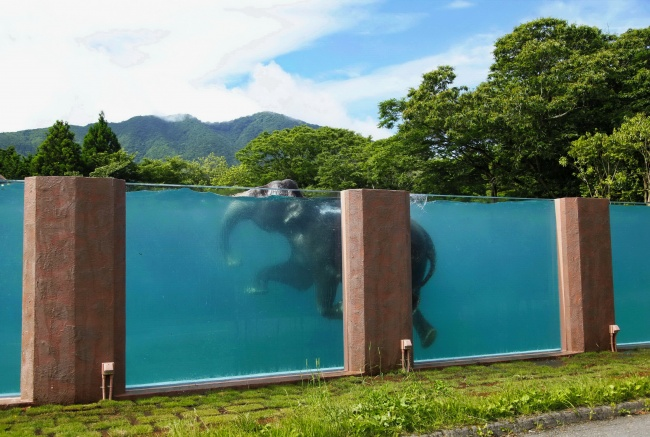 A swimming pool for elephants in a safari park, Japan