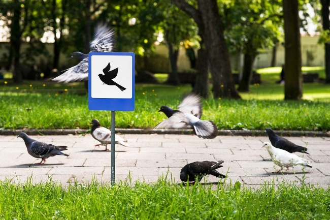Airport for the birds, Vilnius
