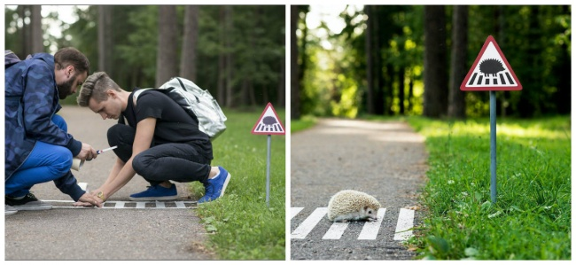 Crosswalk for hedgehogs, Lithuania