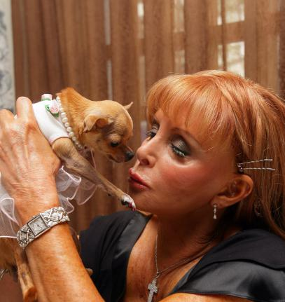 Over pampered and dripping in diamonds, Conchita the Chihuahua could be the world's most spoiled pooch after being left a staggering $11 million by her late owner. Miami heiress Gail Posner, the daughter of infamous corporate takeover artist Victor Posner, died in March aged 67 leaving her $8.3 million mansion and a $3 million trust fund to her beloved pet diva.