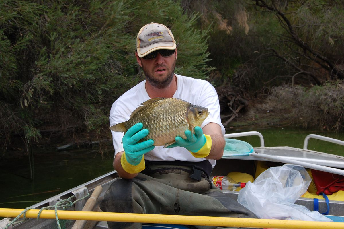 https:_blueprint-api-production.s3.amazonaws.com_uploads_card_image_179720_David_Morgan_with_a_Vasse_River_Goldfish