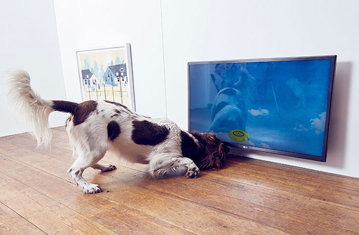 world-first-dog-art-exhibition-dominic-wilcox-london-7