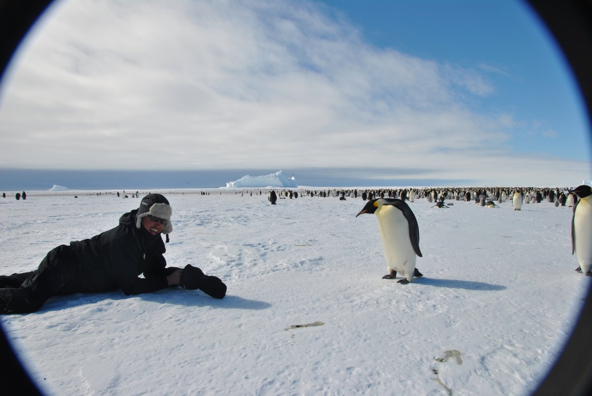 according-to-the-hotels-guides-the-penguins-are-not-afraid-of-humans-and-will-let-guests-get-up-close-for-a-photo