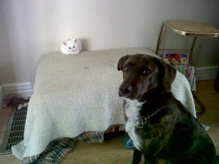 cats-stealing-dog-beds-47-57e122c23f655__700