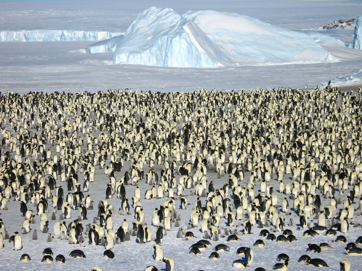 in-addition-to-a-journey-to-the-south-pole-white-desert-will-also-take-you-on-a-two-hour-flight-to-atka-bay-where-a-colony-of-6000-penguins-reside