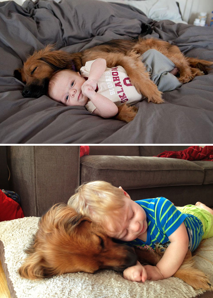before-after-dogs-growing-up-together-with-owners-131-5829ab15b0d35__700