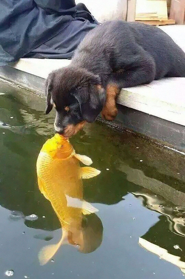 dog-kissing-fish-photoshop-battle-1-1