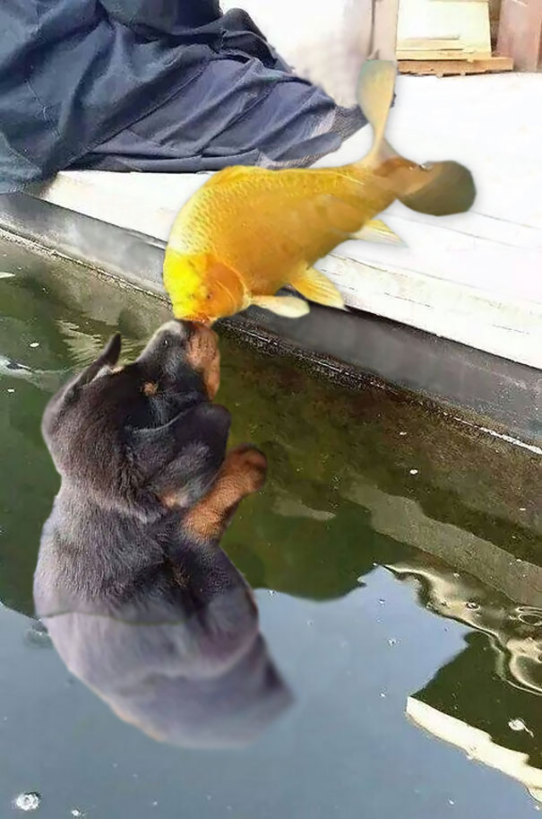 dog-kissing-fish-photoshop-battle-20-581df82e10c0a__605