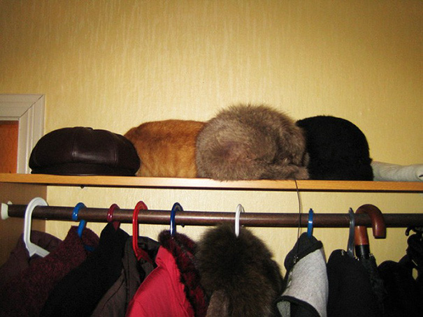 find-hidden-cat-camouflage-hide-and-seek-catouflage-101-58369b5c3d8f2__605