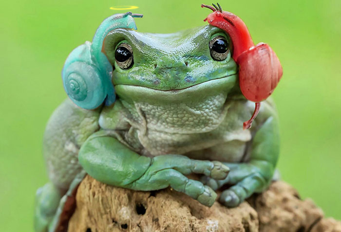 princess-leia-frog-snails-photoshop-battle-9-5839a9b7350c8__700