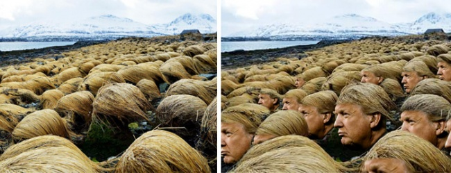 8109560-donald-trump-hair-growing-prairie-dropseed-tromso-norway-7-1481618655-650-4b6661d3c9-1481632709