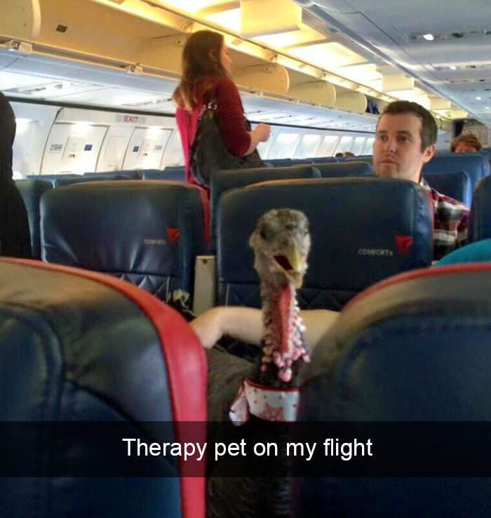 funny-flight-problems-airline-fails-annoying-passengers-10